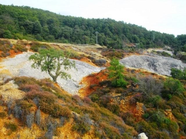 vegetazione-parco-biancane-monterotondo-maremma
