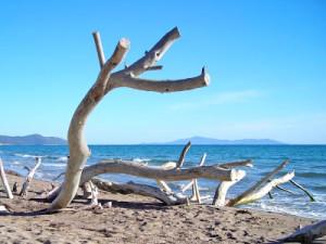 foto della spiaggia di alberese