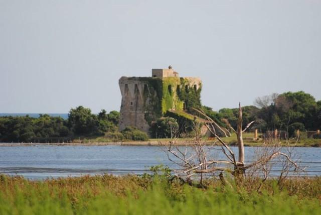 """"""" Torre del lago di Burano"""" posta nell'oasi del w.w.f. in quel di Capalbio (Gr)  Girolamo Cannatà"""