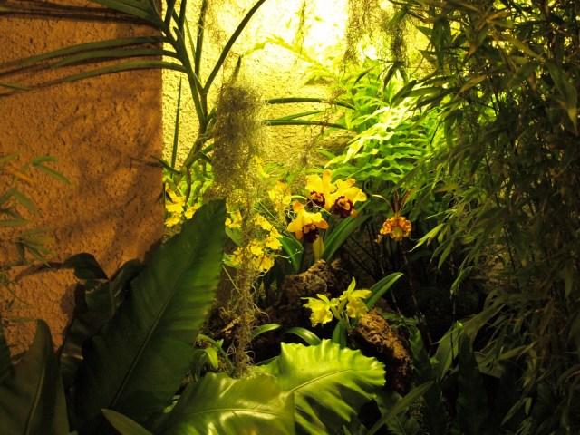 giardino_esperidi_orchidee_2