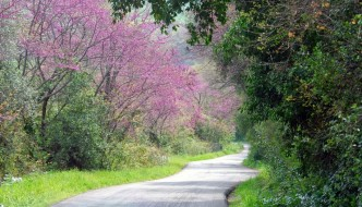 Aspetti identificativi del paesaggio in Maremma: il paesaggio rurale