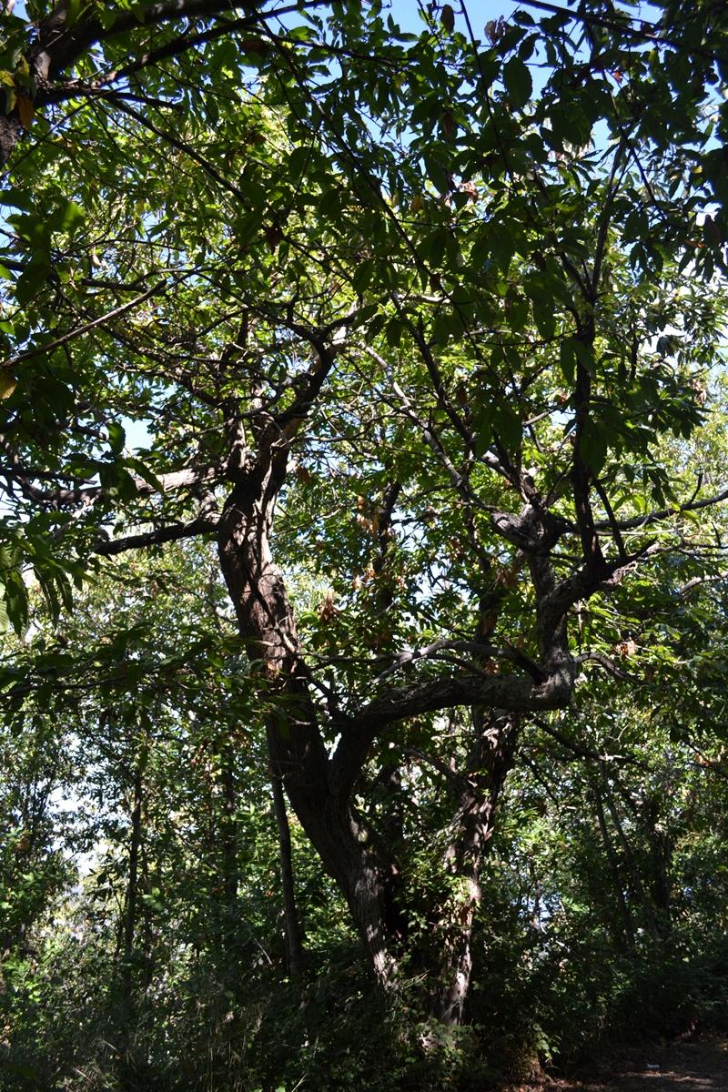 castagno-bosco-tirli