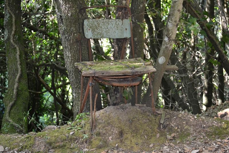 sedie-nel-bosco-tirli