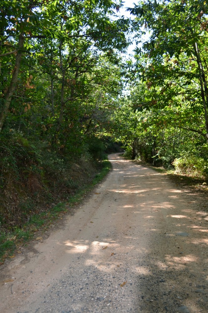 sentiero-nel-bosco-tirli