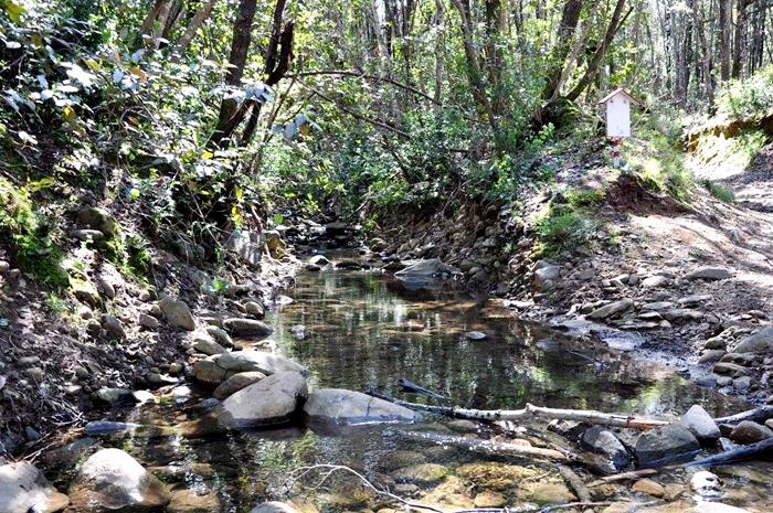 L'acqua del bosco