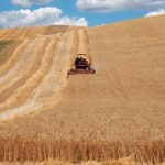 The Threshing in Maremma